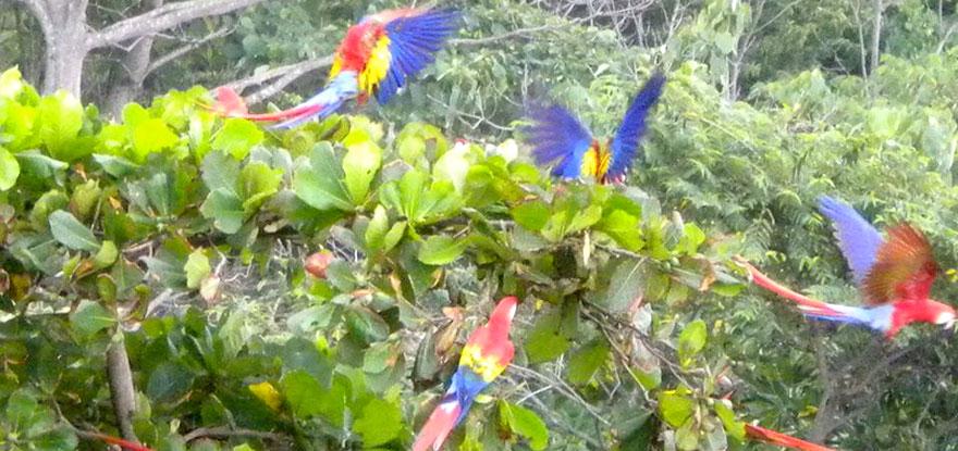 Papegaaien in de tuin